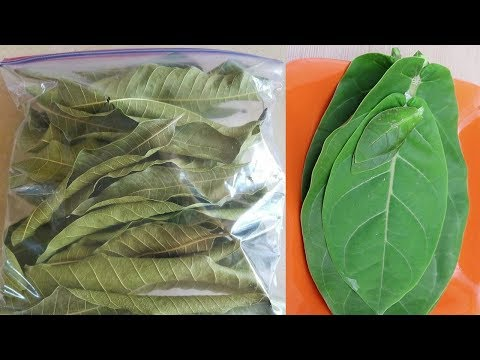 Incredible Tree Leaves For Cure Diabetes