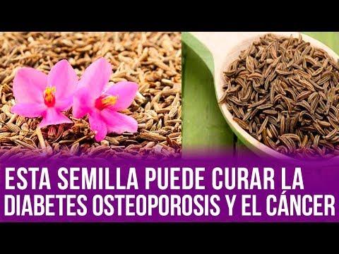 Esta Semilla Puede Curar La Diabetes Osteoporosis Y El Cáncer