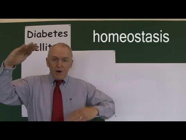 Diabetes 2, Blood Glucose Homeostasis
