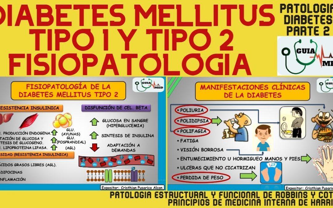 FISIOPATOLOGÍA DE LA DIABETES MELLITUS TIPO 1 Y TIPO 2 | GuiaMed